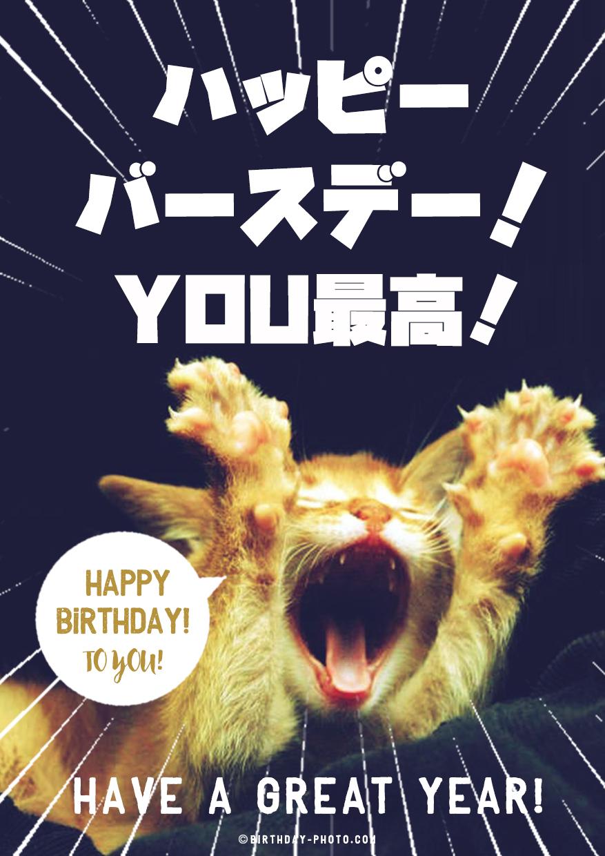 笑える おもしろ 誕生日 猫 画像 フリー